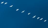 Cómo funciona la migración de un e-commerce: qué tener en cuenta al cambiar de hosting, de plataforma o pasar al online